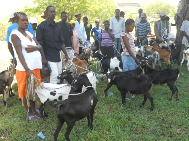Families receiving goats; just one sustainable food source provided through our Family Assistance Program.