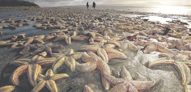 Thousands of starfish were left to die. One man walked along the shore and threw them back to sea, one at a time.