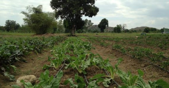 Drip Irrigation Means Sustainable Year-Round Crop Growth