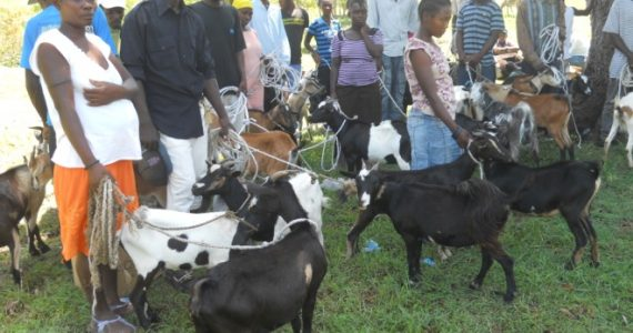 Rotary International Contributes to Sustainable Living in Haiti