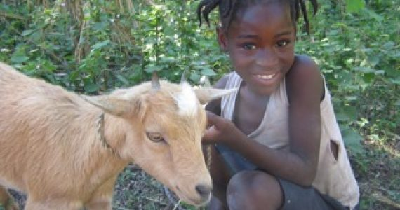 Note from Gillaine – Goats Build Stronger, Healthier Communities!